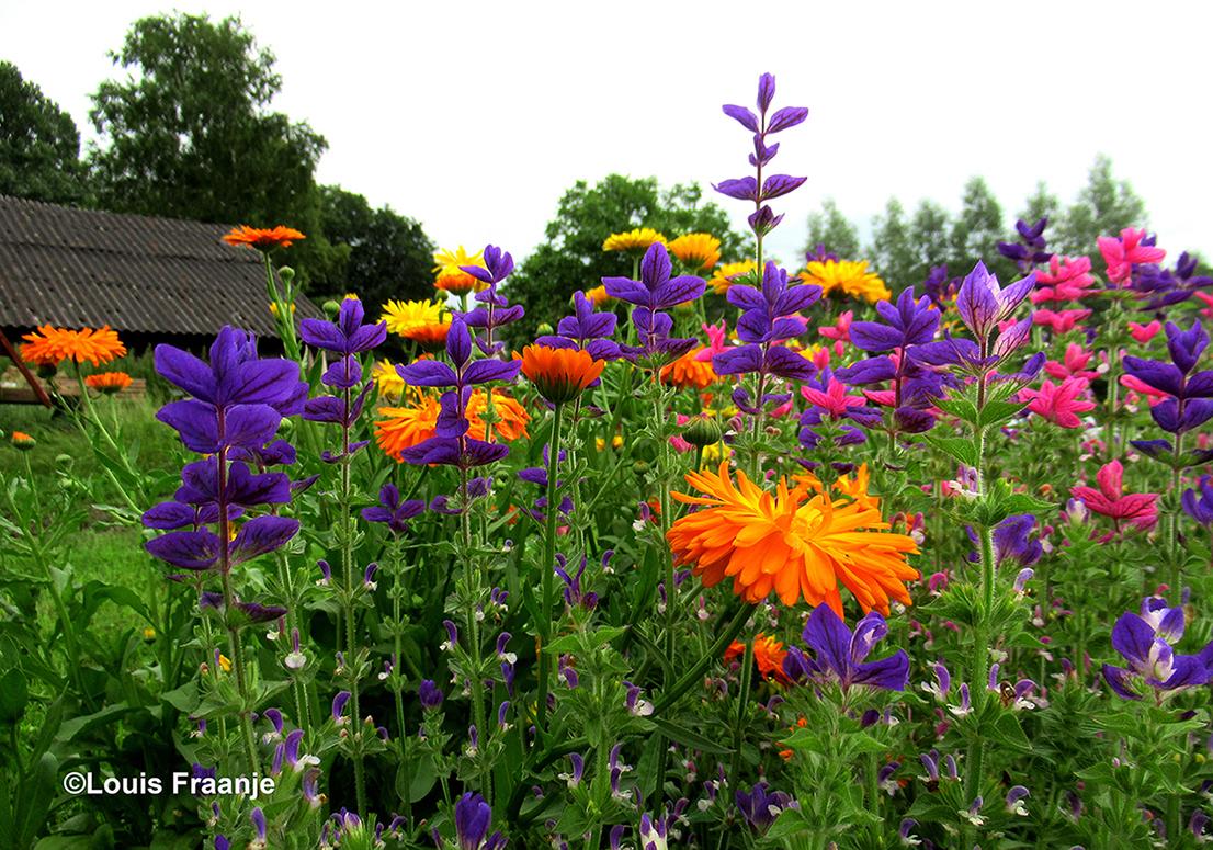 Fleurig en kleurrijk hoekje op een Veluws boerenerf - Foto: ©Louis Fraanje