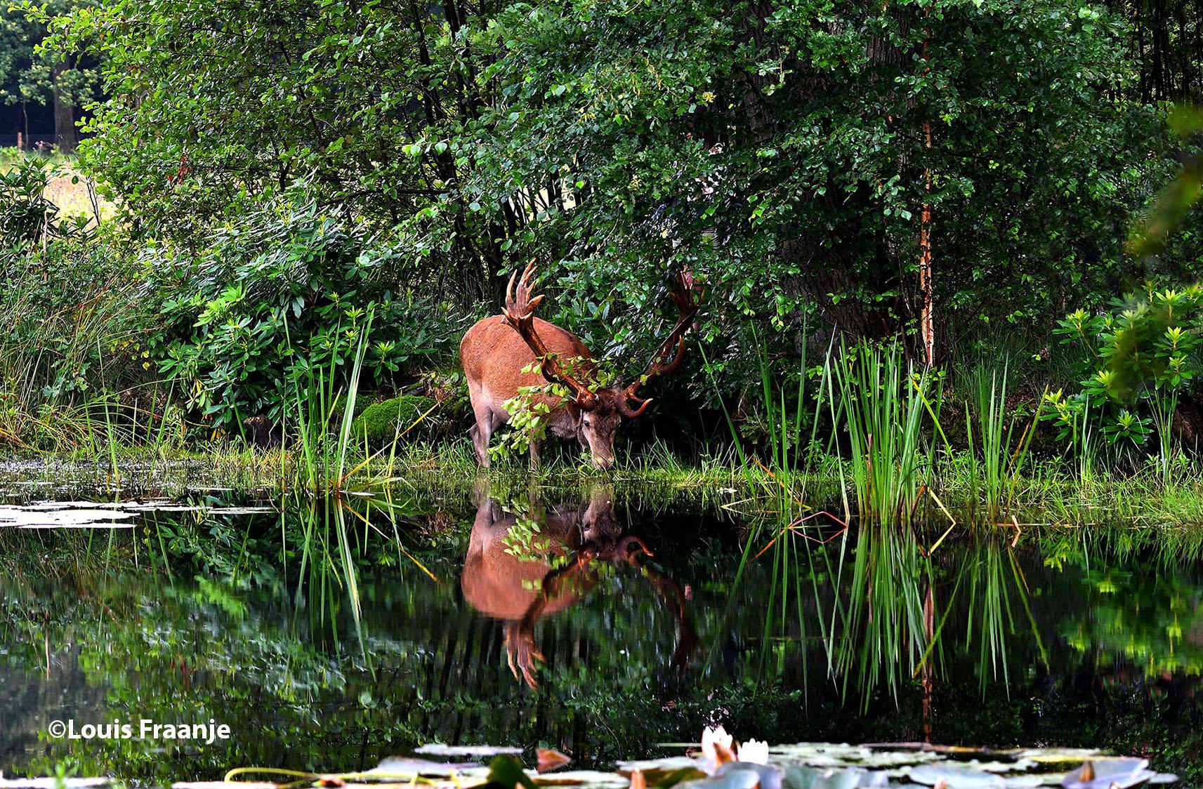 En dan tot slot nog even een lekkere slok water - Foto: ©Louis Fraanje