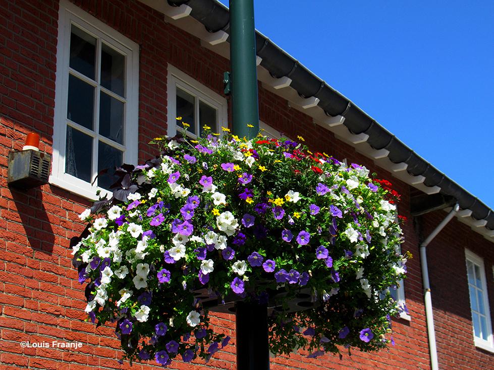 Overal in Scherpenzeel kleuren de baskets met bloemen de straten, geweldig! - Foto: ©Louis Fraanje
