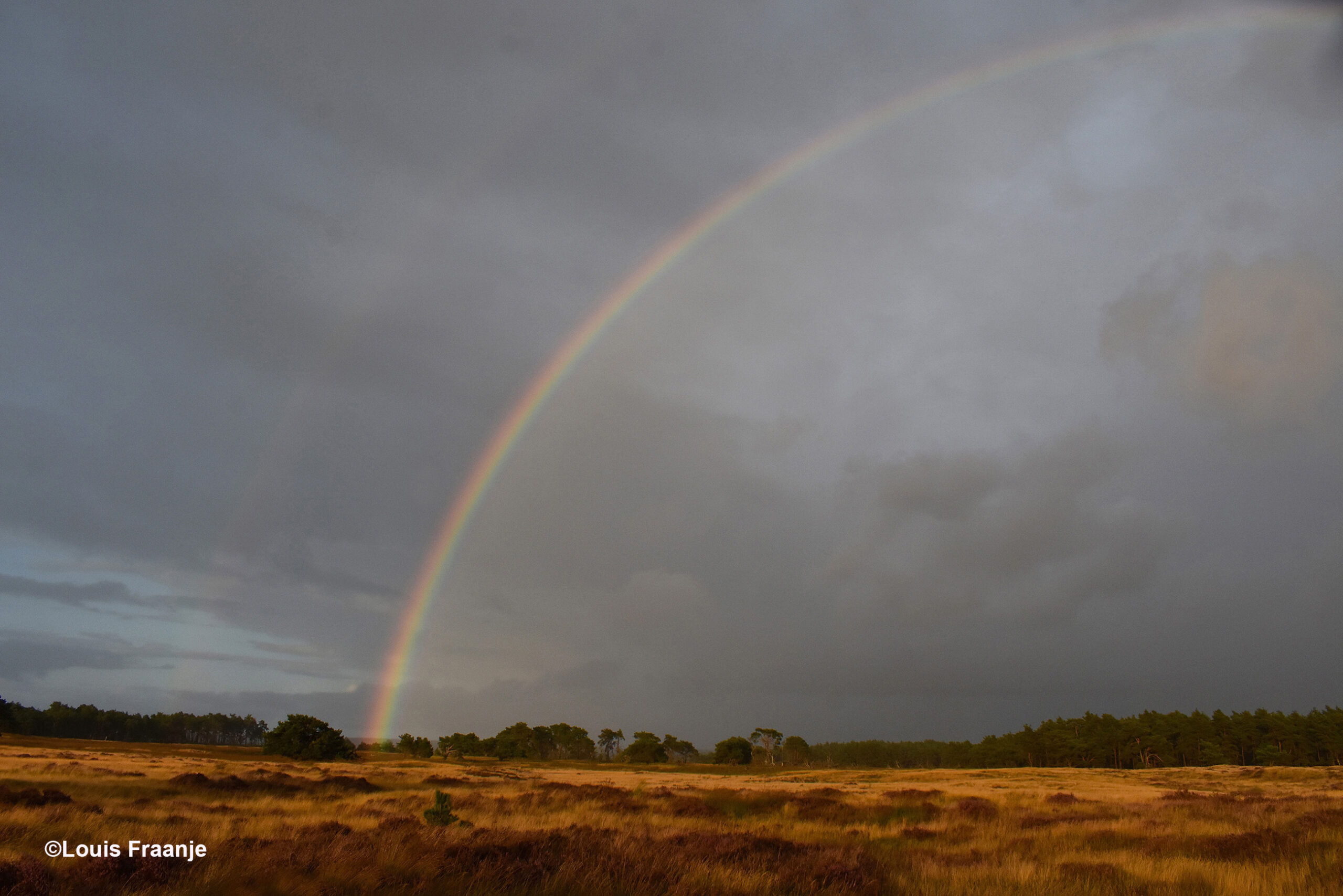 Ineens verscheen ineens glashelder de regenboog boven de bossen - Foto: ©Louis Fraanje
