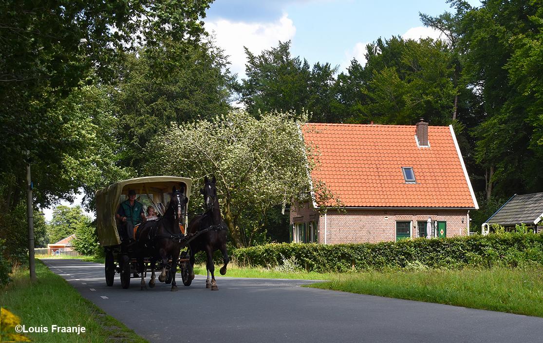 Ter hoogte van de Kleine Kolonieweg kwam een huifwagen met een tweespan paarden aanrijden van De Lindeboom uit Elspeet - Foto: ©Louis Fraanje