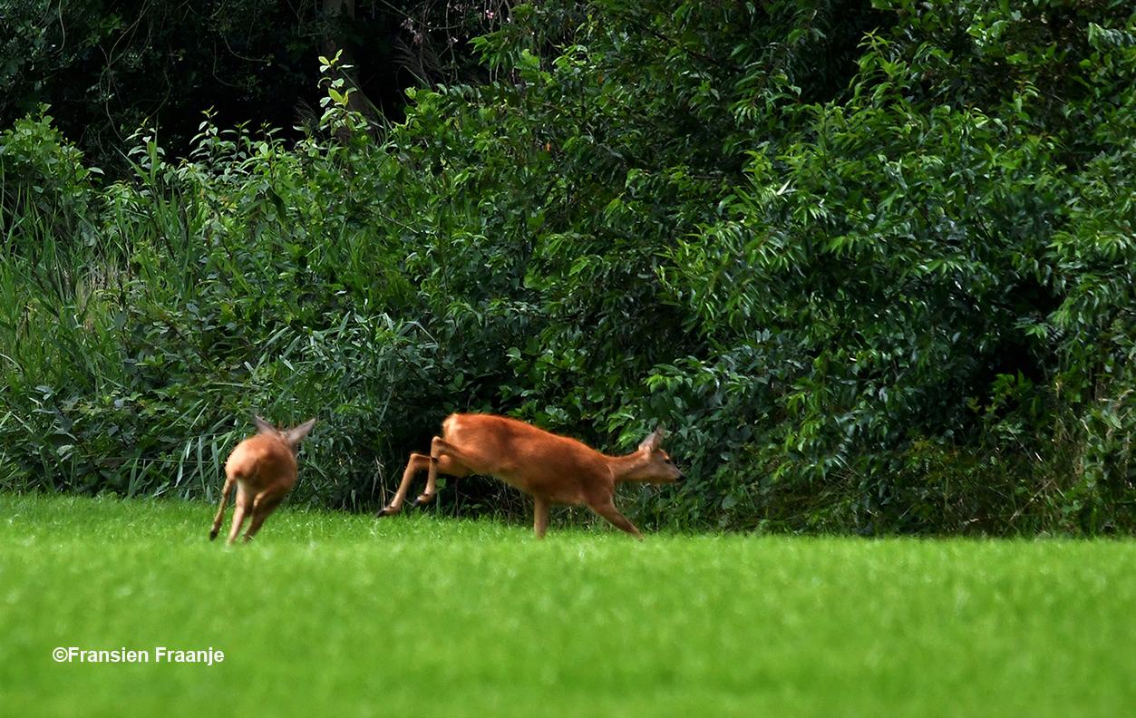 Uiteindelijk gingen ze er toch vandoor - Foto: ©Fransien Fraanje
