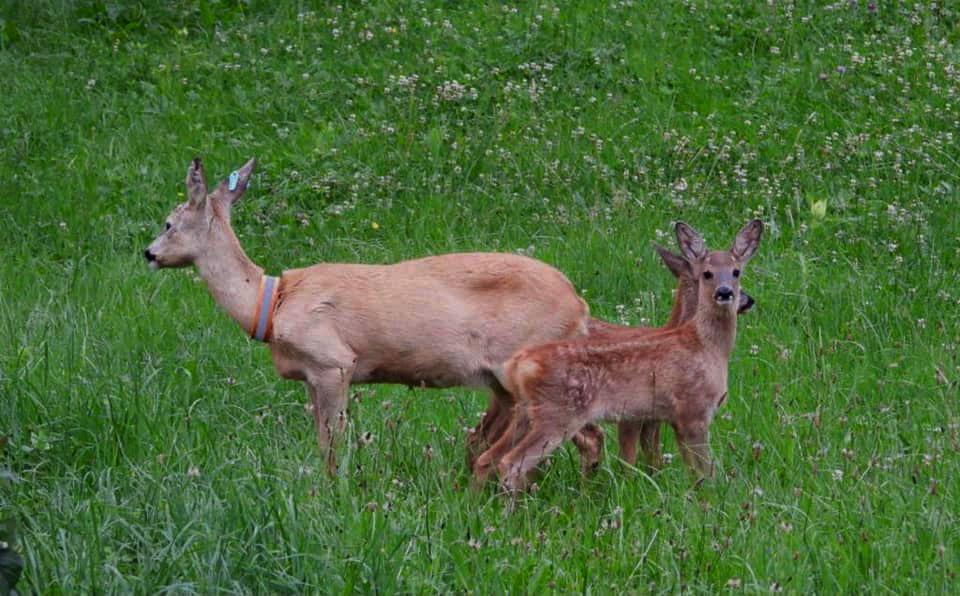 Moeder Schneewittchen en haar tweeling - Foto: ©Edgar Klein