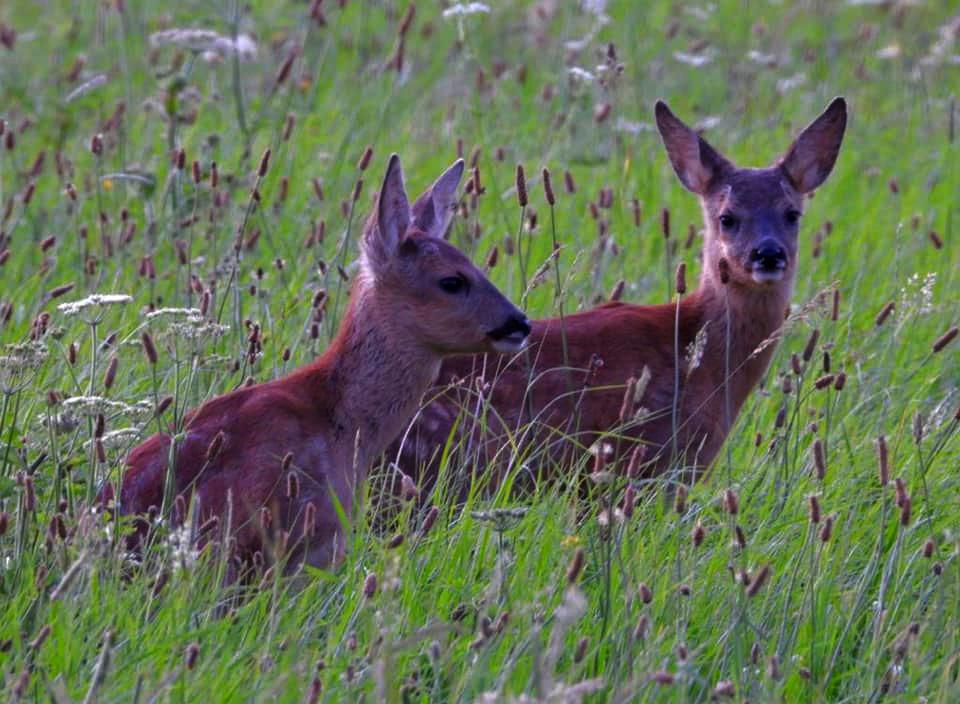 Boer en zus tweeling bij Susa Bobke in het veld - Foto: ©Edgar Klein
