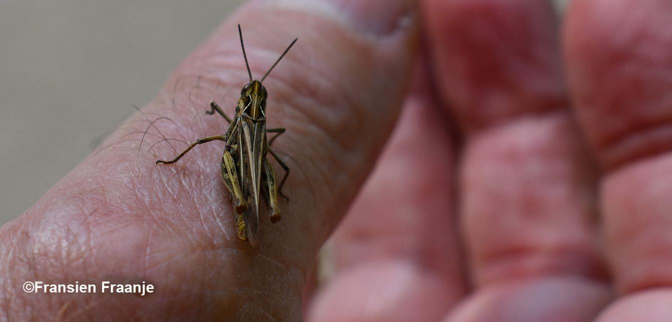 Een insect om eens van dichtbij te bekijken - Foto: ©Fransien Fraanje