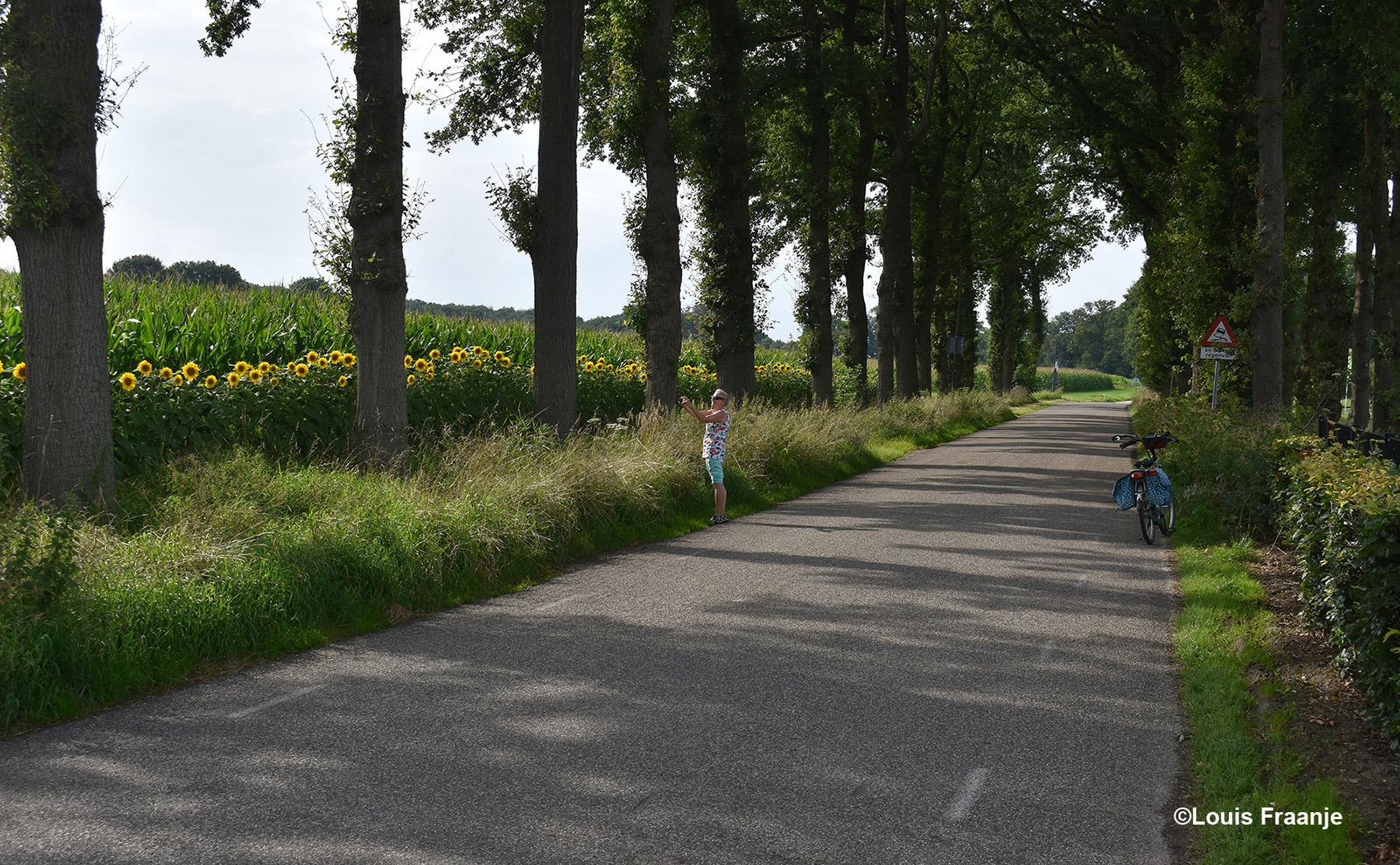 Bij de Cuneraweg stoppen we uiteraard voor de prachtige rijen met zonnebloemen - Foto: ©Louis Fraanje