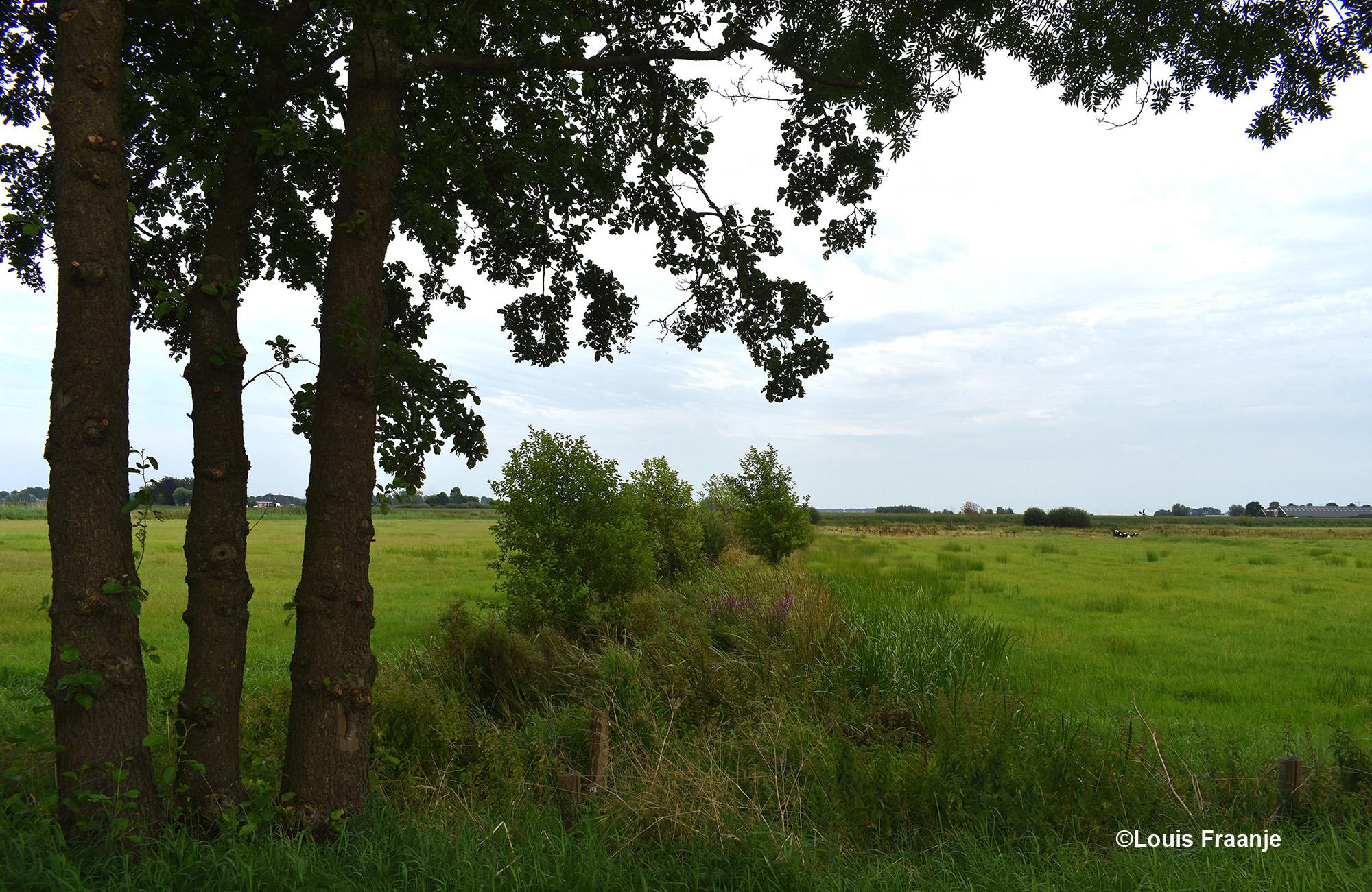 Over de Rauweveldseweg genieten van de uitgestrekte Hooilanden - Foto: ©Louis Fraanje