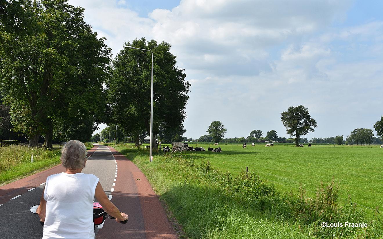 Bij Groot Batelaar hebben koeien de schaduw van een oude boom opgezocht - Foto: ©Louis Fraanje