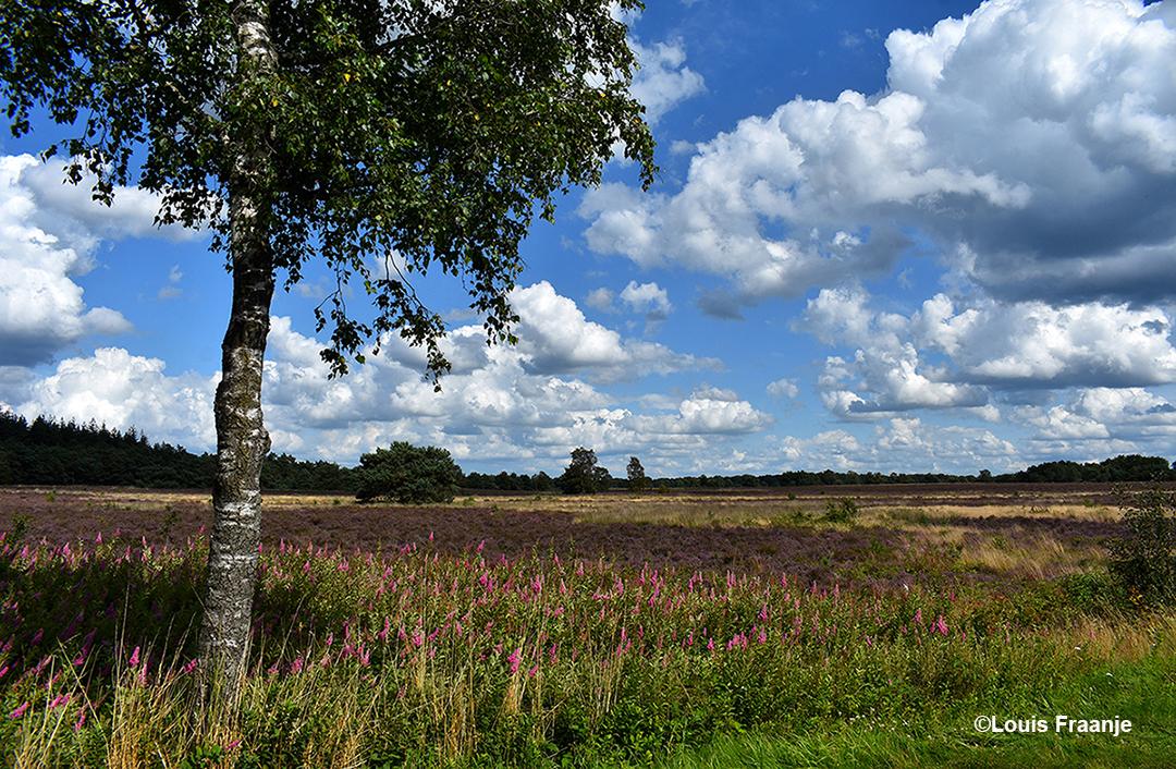 De heide langs de Middenweg met een prachtige wolkenlucht op de achtergrond - Foto: ©Louis Fraanje