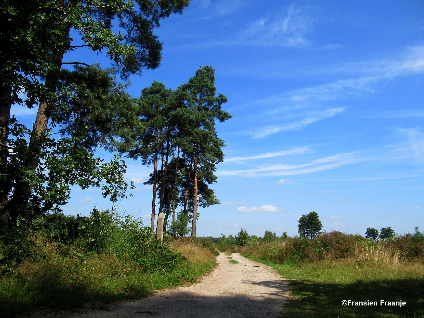 De prachtige hoge sparren en dennen als wachters aan de rand van de heide op Landgoed Den Treek Henschoten - Foto: ©Fransien Fieneke Fraanje-