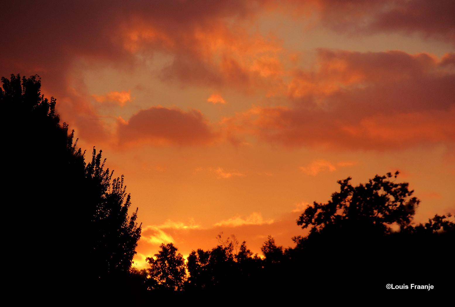 Na zonsondergang ontvouwde zich boven de boomtoppen een prachtig avondrood - Foto: ©Louis Fraanje