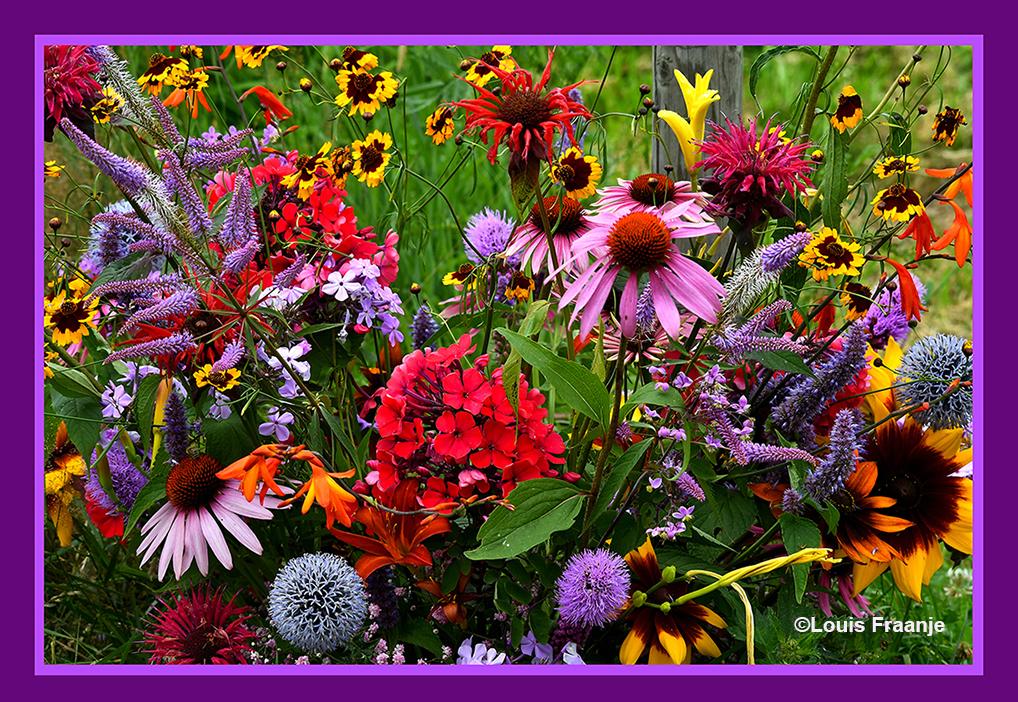 Een pluktuin staat vol met allerlei soorten mooie bloemen - Foto: ©Louis Fraanje