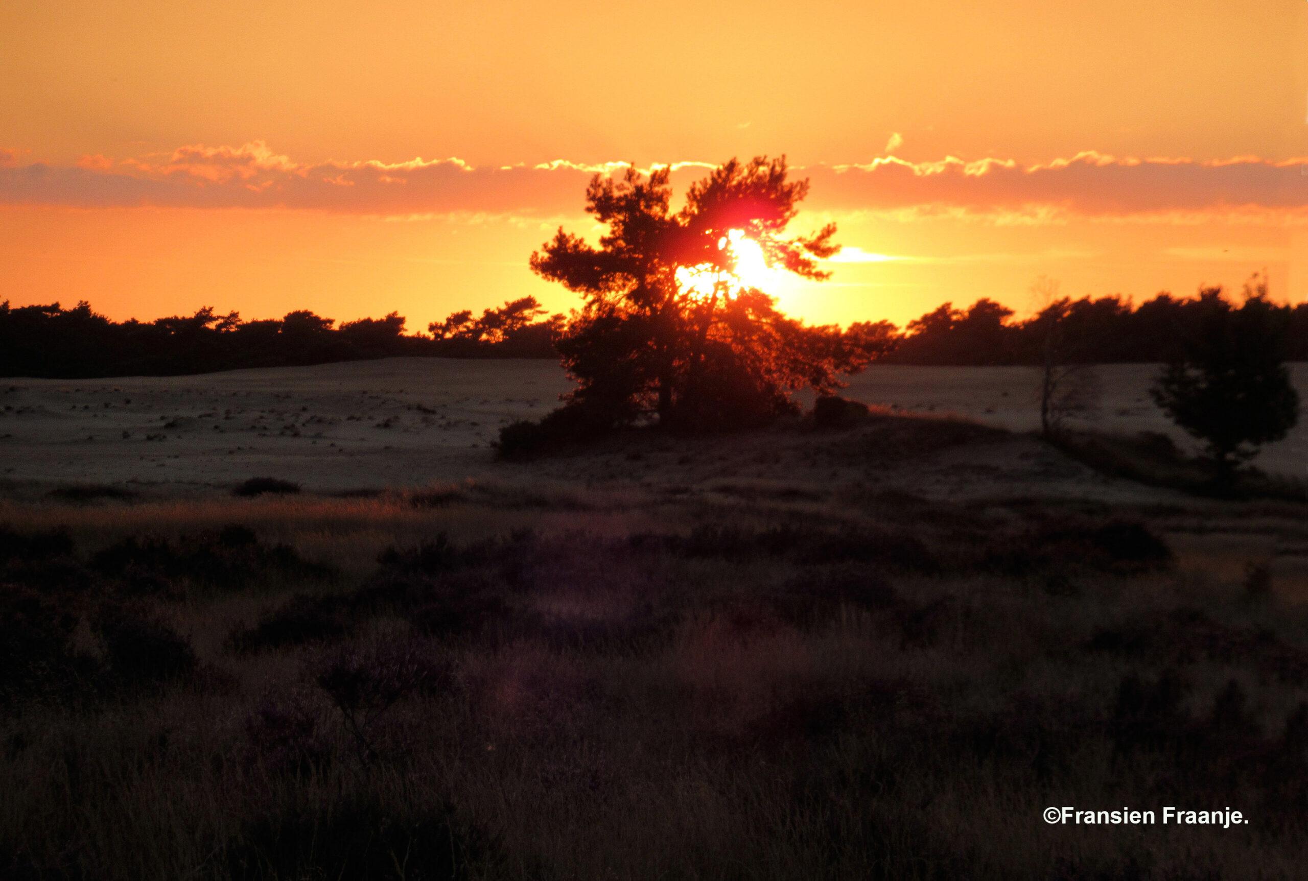 De zon scheen er dwars doorheen, het leek wel of hij in de brand stond - Foto: ©Fransien Fraanje.
