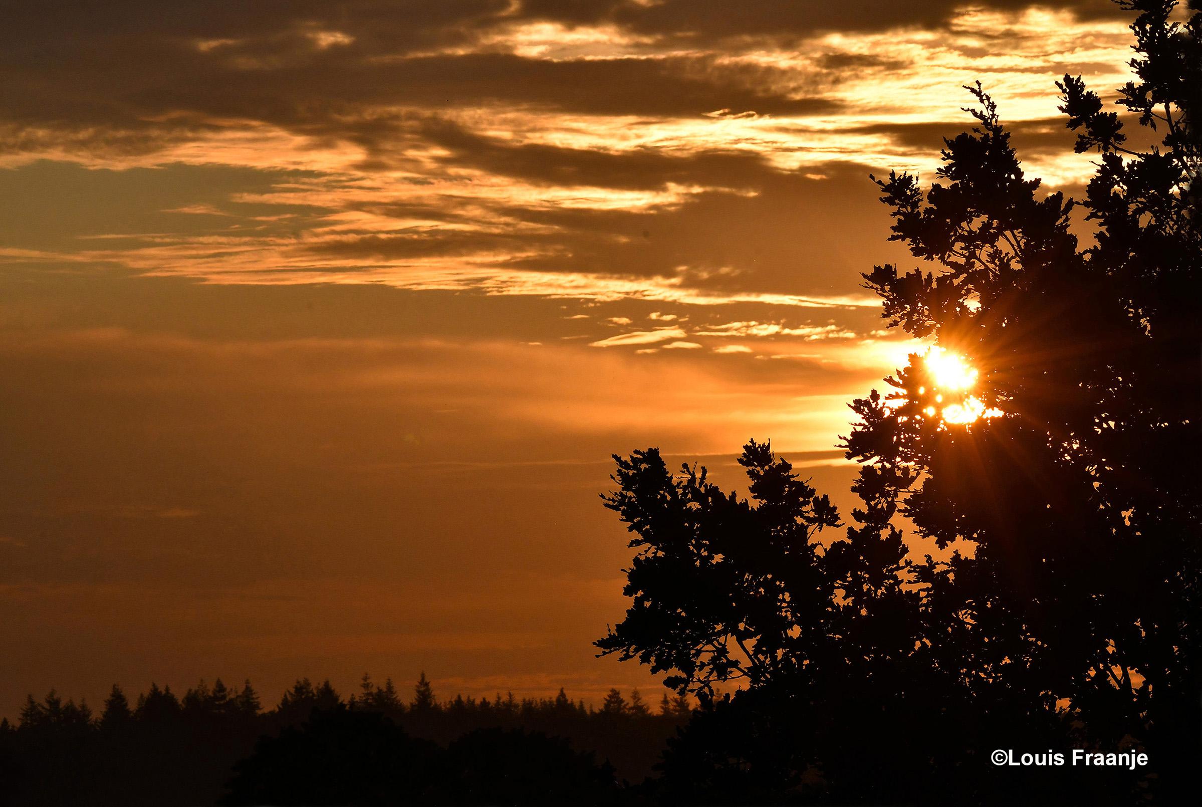 Vanmorgen scheen de zon tussen de wolken en door de bomen heen ons tegemoet - Foto: ©Louis Fraanje