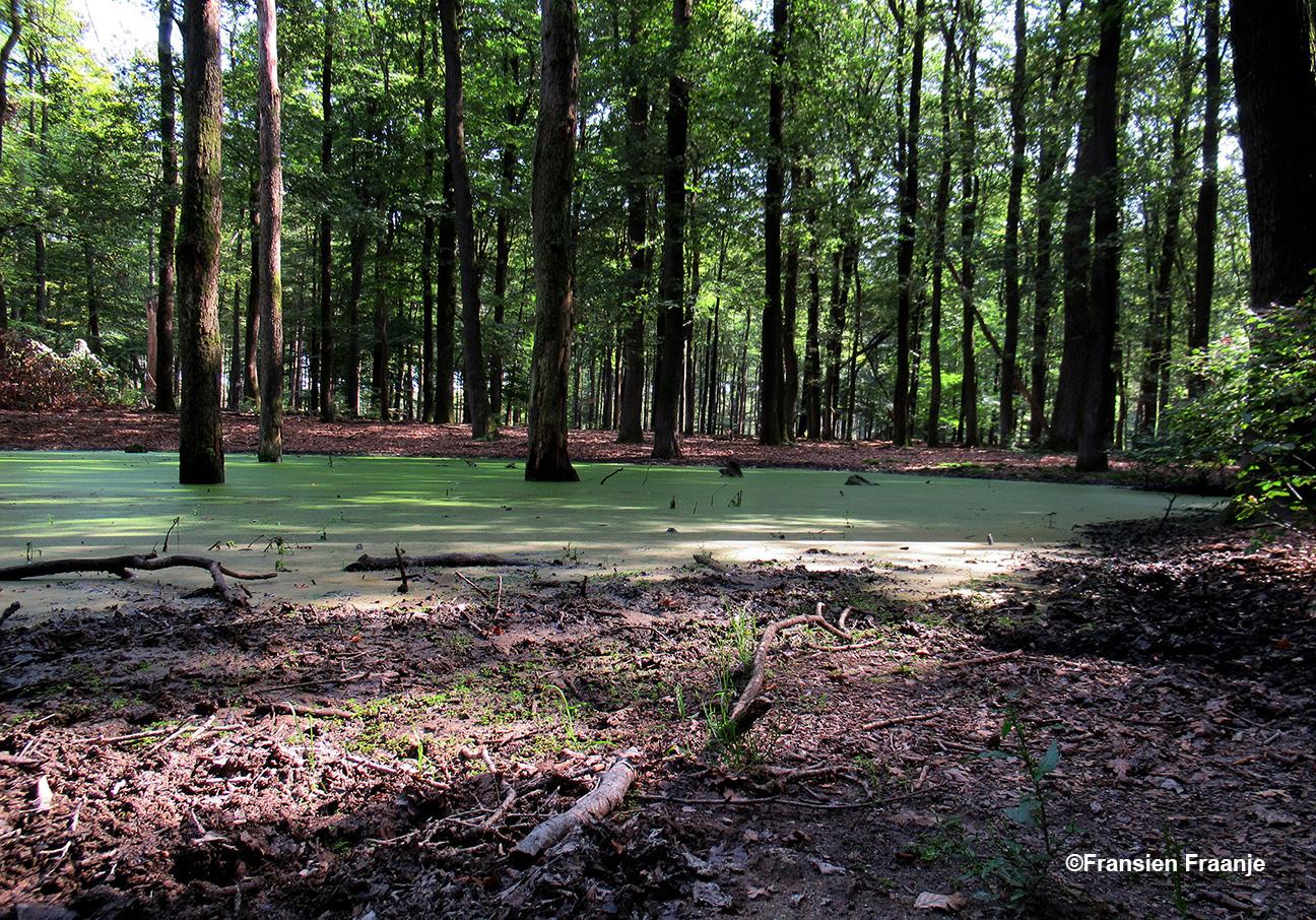Een grote plas in het Kroondomein waar de zwijnen graag komen, maar ze waren er niet - Foto: ©Fransiens Fraanje