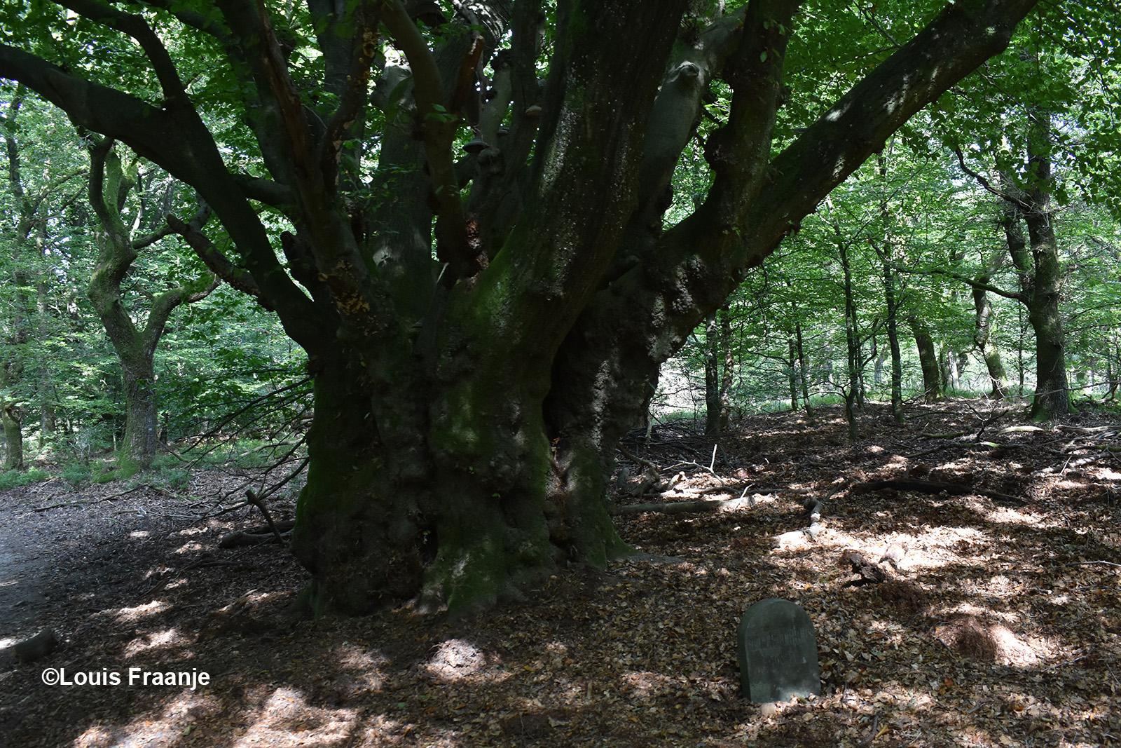 We gaan eerst achter in het bos bij het Peter Gerritsboompje kijken - Foto: ©Louis Fraanje