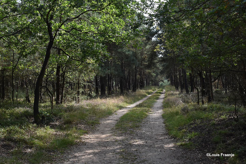 Zomaar eentje van de vele bospaden in het Kroondomein - Foto: ©Louis Fraanje
