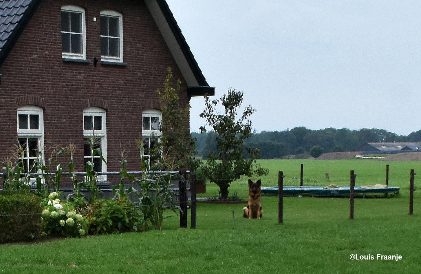 De Duitse herder zit van een afstand het hele gebeuren nauwlettend in de gaten te houden - Foto: ©Louis Fraanje