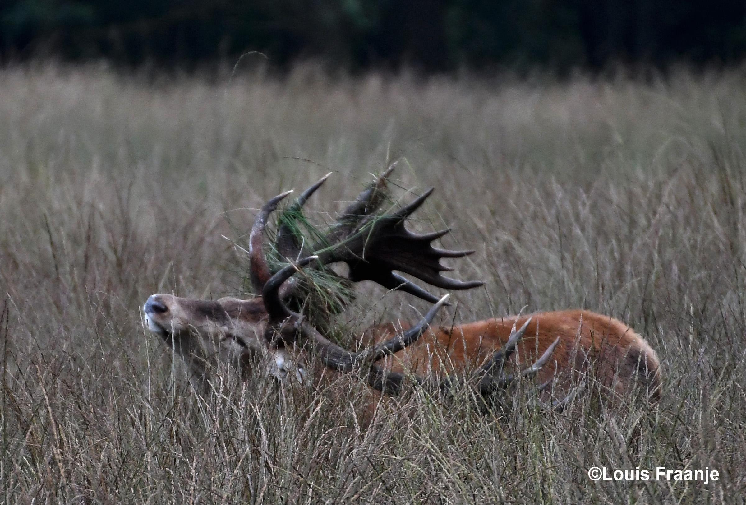 En vliegen de plaggen in het rond - Foto: ©Louis Fraanje