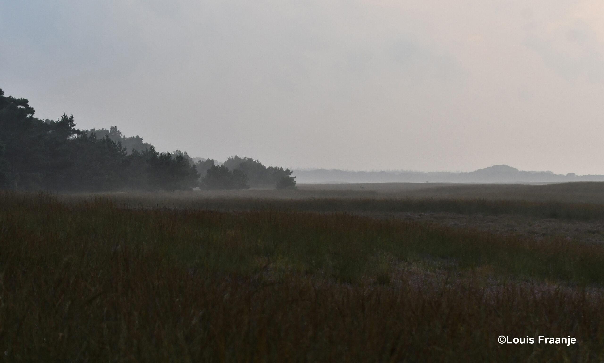 Er komt grondmist en even later is het Reemsterveld in nevelen gehuld - Foto: ©Louis Fraanje