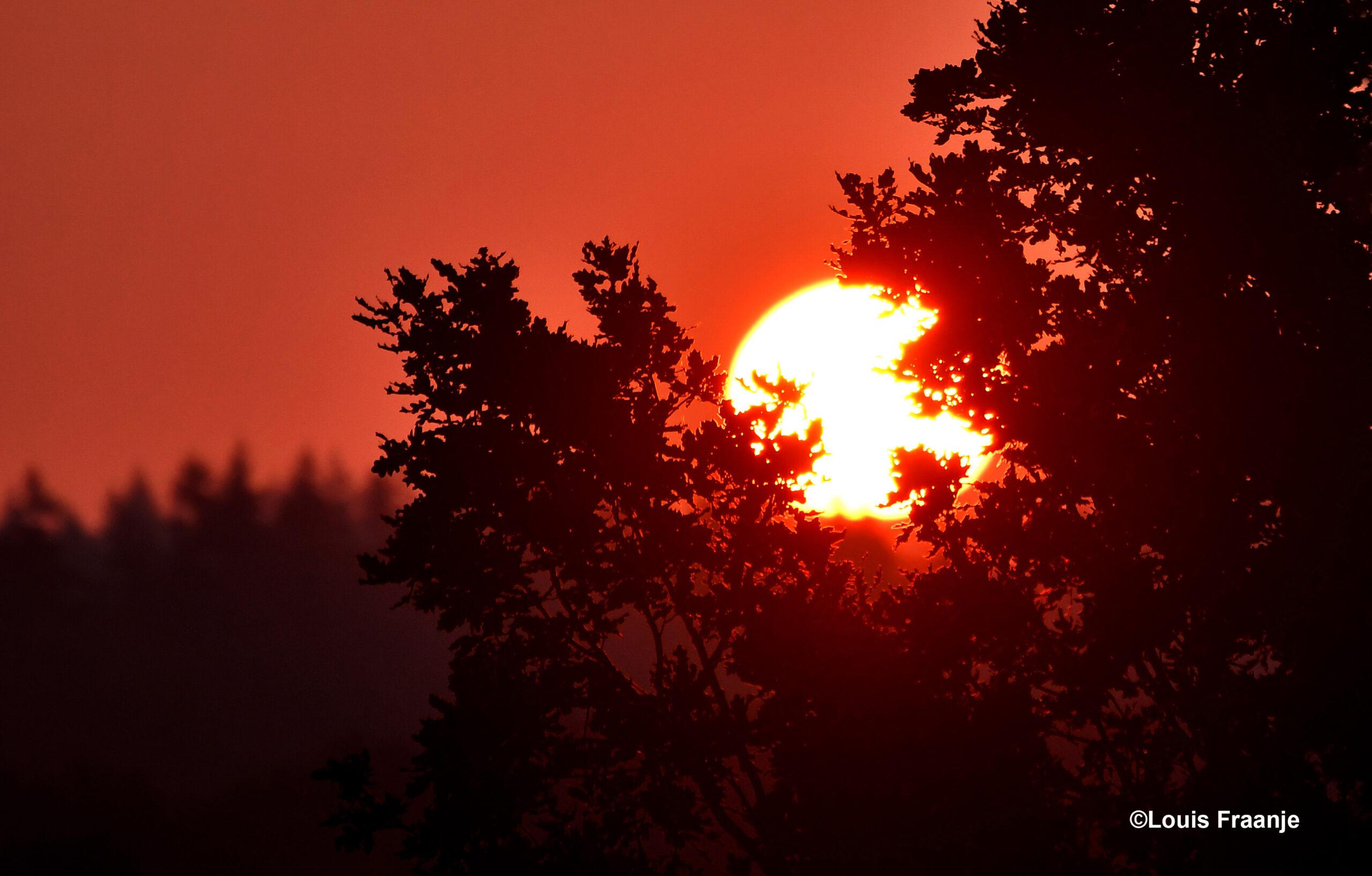 Vanmorgen scheen de zon tussen de bomen door ons tegemoet- Foto: ©Louis Fraanje