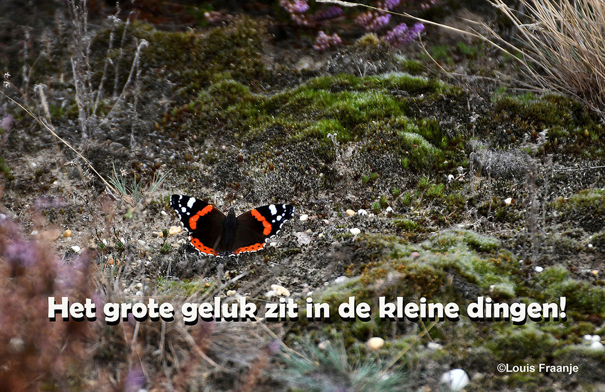 Op de grond zat een prachtige Atalanta vlinder - Foto: ©Louis Fraanje