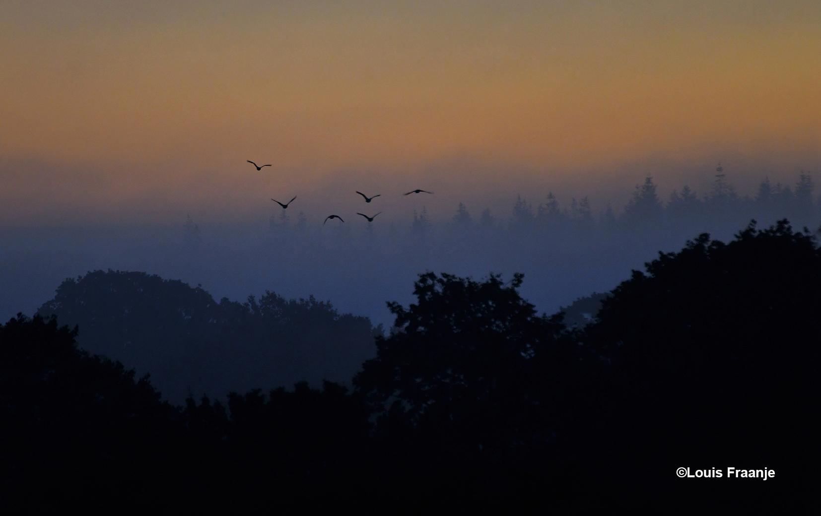 Terwijl het morgenlicht begint te gloren, komt en opeens er een kleine vlucht ganzen overvliegen - Foto: ©Louis Fraanje
