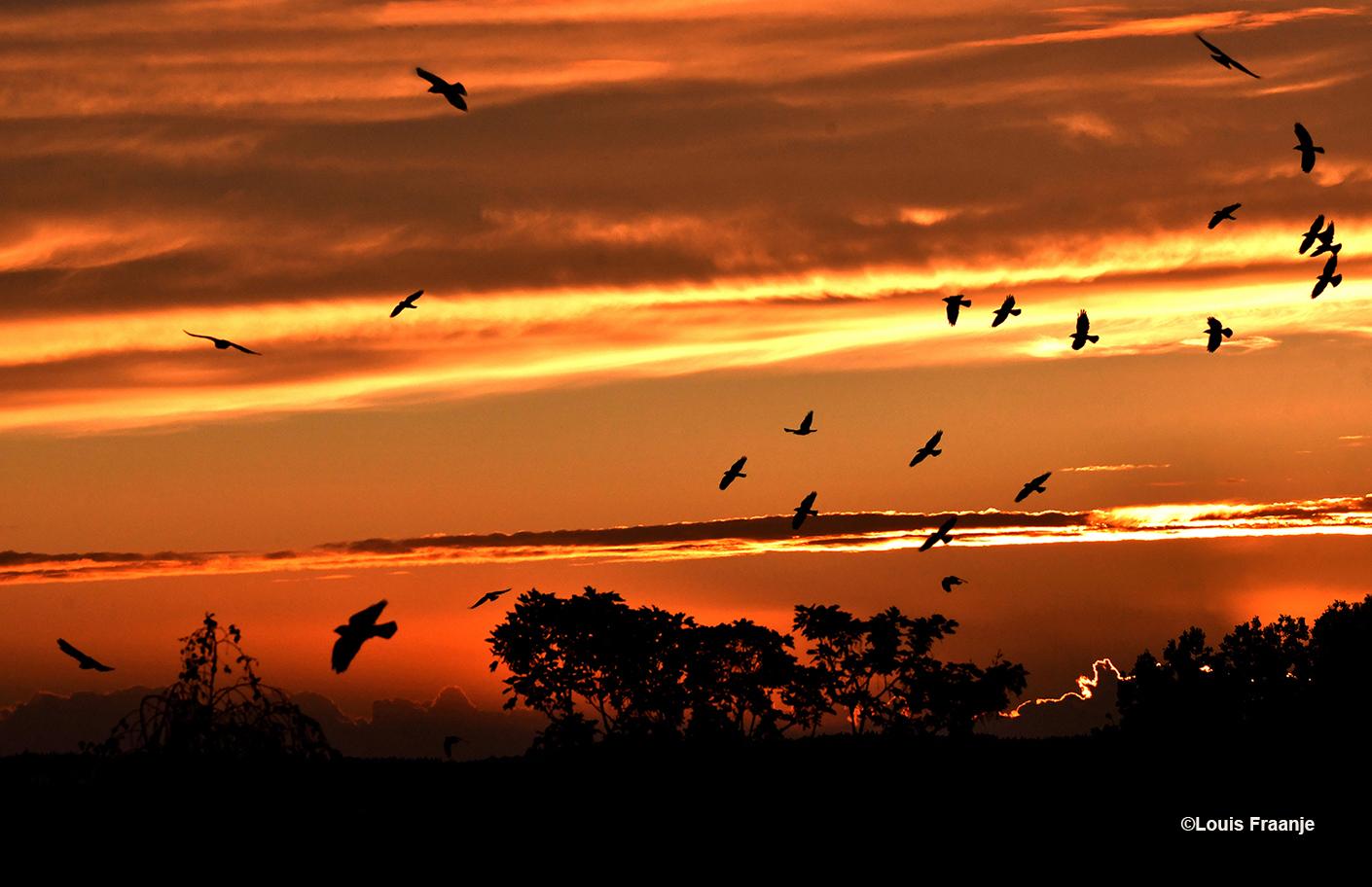 Zonsondergang, waarbij er een hele zwerm vogels dwars doorheen kwam vliegen - Foto: ©Louis Fraanje